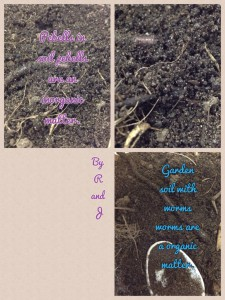 A5D99343-3B9ACA00-1-PicCollage